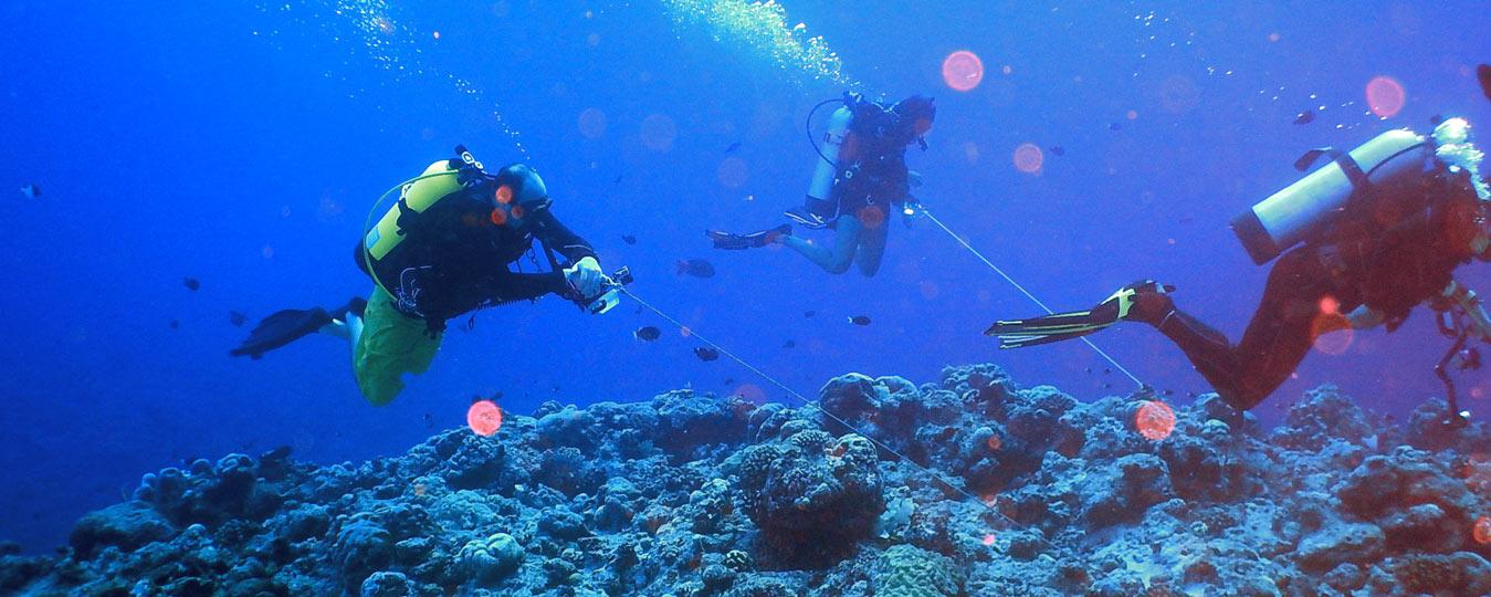 Palau Dropoff